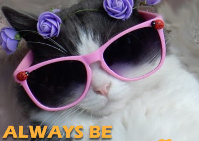 Fabweb - photo of cat in sunglasses. Always Be Fabulous.